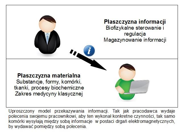 Uproszczony model przekazywania informacji
