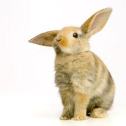 Jakie choroby zakaźne są groźne dla królików?